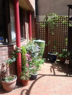 our sunny summer welcoming garden